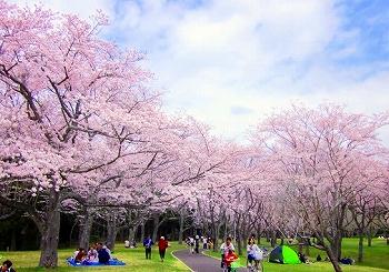 20160501_桜公園.jpg